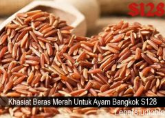 Khasiat Beras Merah Untuk Ayam Bangkok S128