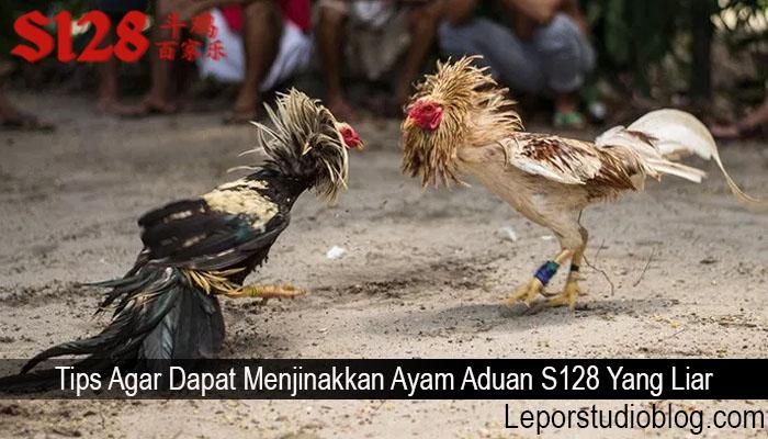 Tips Agar Dapat Menjinakkan Ayam Aduan S128 Yang Liar
