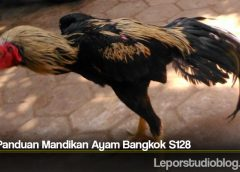 Tips Panduan Mandikan Ayam Bangkok S128